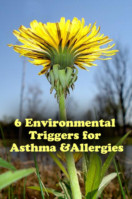 6 Environmental Triggers for Asthma and Allergies