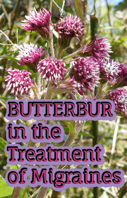 Butterbur in the Treatment of Migraines