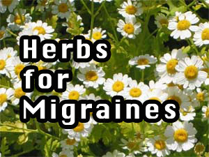 Herbs for Migraines
